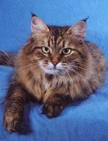 Татьяна Павлова, Президент Объединения Любителей Сибирских кошек.